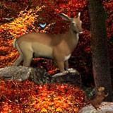 3D Autumn Woods 1.0 screenshot