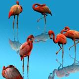 3D Flamingos 1.0 screenshot