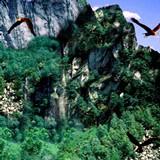 3D Majestic Eagles 1.0 screenshot