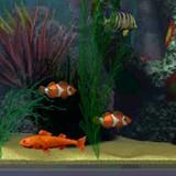 3D Salt Water Fish Tank 1.0 screenshot