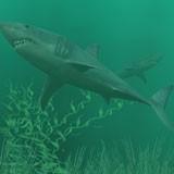 3D Sharks 1.0 screenshot