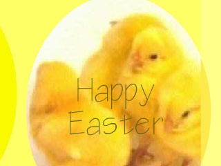 Animated Easter Chickens Wallpaper 1.0 screenshot