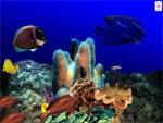 Aquatica 3D Fish Screen Saver 2.17 screenshot