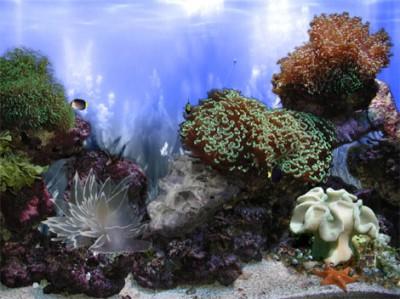 AR :: Amazing 3D Aquarium ADD-on  ::  Coral Landsc 1.00 screenshot