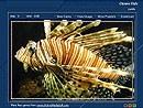 Beautiful Fish 1.0 screenshot
