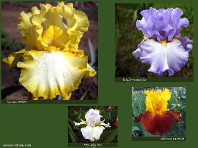 Beautiful Iris Screen Saver 5.0 screenshot