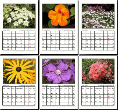 Blumen-Kalender 2006 1.0 screenshot