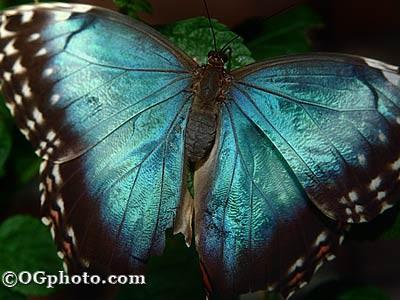 Butterflies of the World Screen Saver and Wallpape 3.3 screenshot