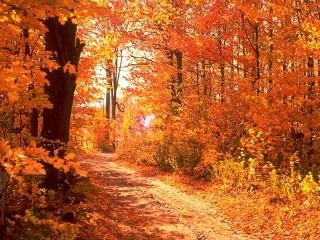 Colors of Autumn DesktopFun Screens... 3.0 screenshot