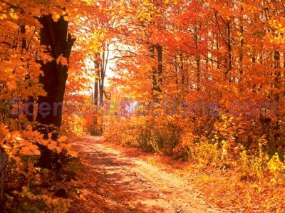 colors-of-autumn-free-screensaver.jpg