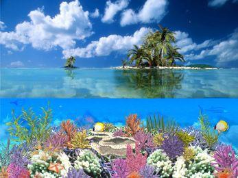 Coral Island 5.07 screenshot