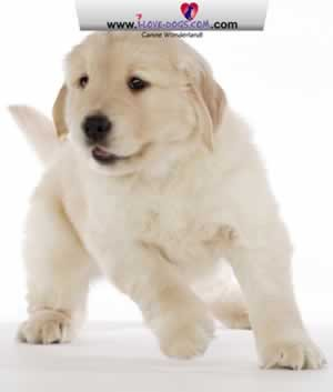 Cute Dog Screensaver