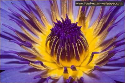 Flower Wallpaper 1024 1.1 screenshot