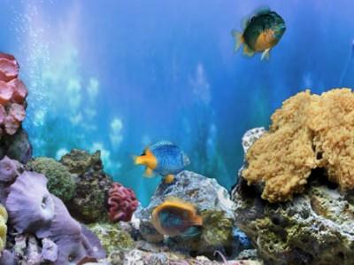 FP :: Amazing 3D Aquarium ADD-on  :: Chrysiptera - 1.00 screenshot