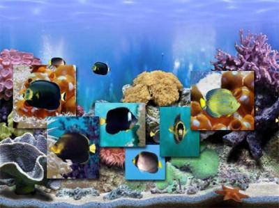 FP :: Amazing 3D Aquarium Free ADD-on  :: Chaetodo 1.00 screenshot