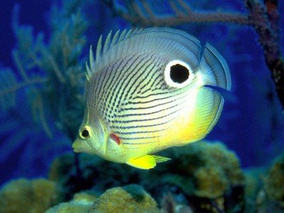 fish tank wallpaper. Free Marine Aquarium