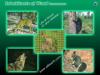Inhabitants of Wood Screensaver 1.0 screenshot
