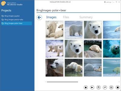 NCollector Studio Lite 3.5.0.2895 screenshot
