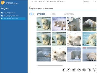 NCollector Studio 3.5.0.2895 screenshot