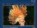 Orange Fish 1.0 screenshot