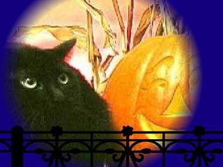 Screechy Cat Halloween Wallpaper 2.0 screenshot