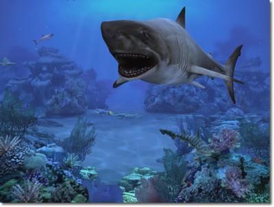 http://static.rbytes.net/full_screenshots/s/h/sharks--terrors-of-the-deep.jpg