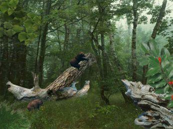 Three Bears 5.07 screenshot