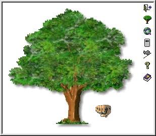 Touch Wood 1.0 screenshot