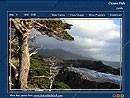 Trees On The Rocks 1.0 screenshot