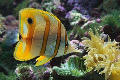 Tropical Fish ScreenSaver 1.0 screenshot