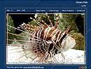 Tropical Fish 1.0 screenshot