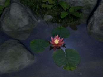 Water Lily 5.07 screenshot