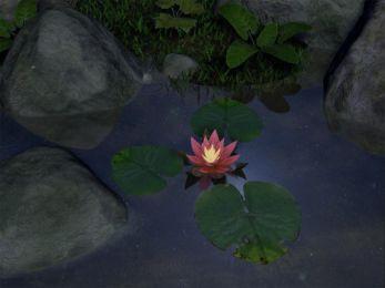 Water Lily 5.07 screenshot