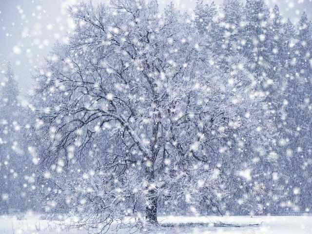 dx-winter-snow-screensaver.jpg