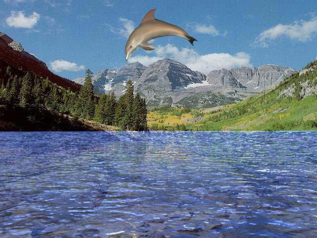 Dolphin Screensaver 7