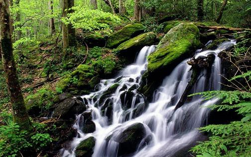 free waterfall pictures. Free Living Forest Waterfall