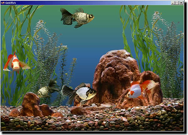aquarium fishes wallpapers. goldfish aquarium fish